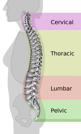 Spinal Cord Wiki